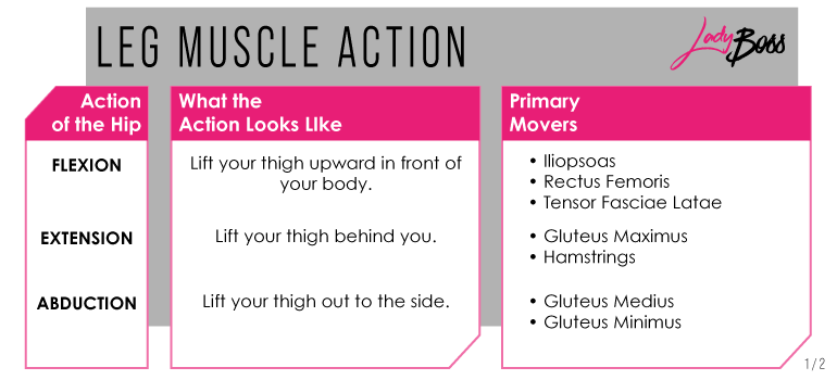 muscle in legs workout