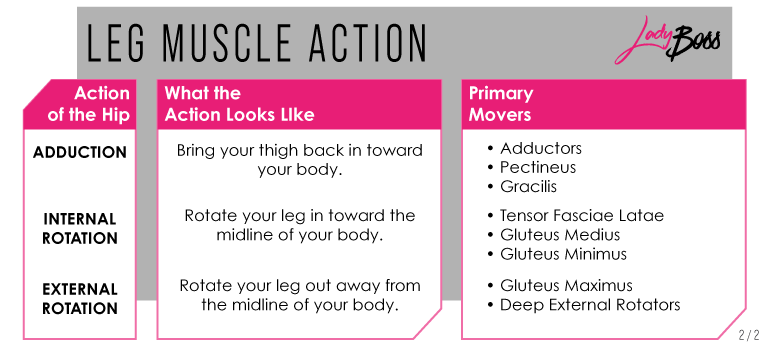 Muscles in leg exercises