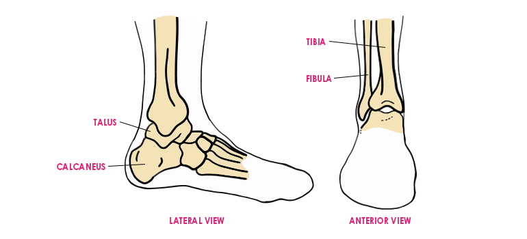 Ankle in leg exercises